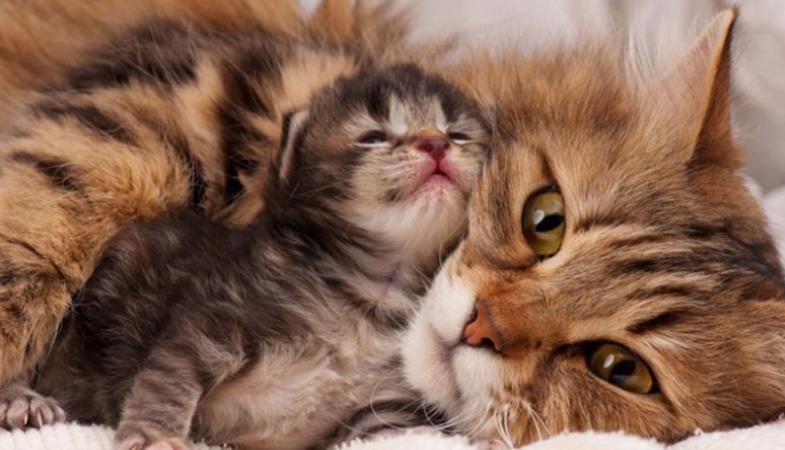 Conosci le principali fasi di crescita del gatto?
