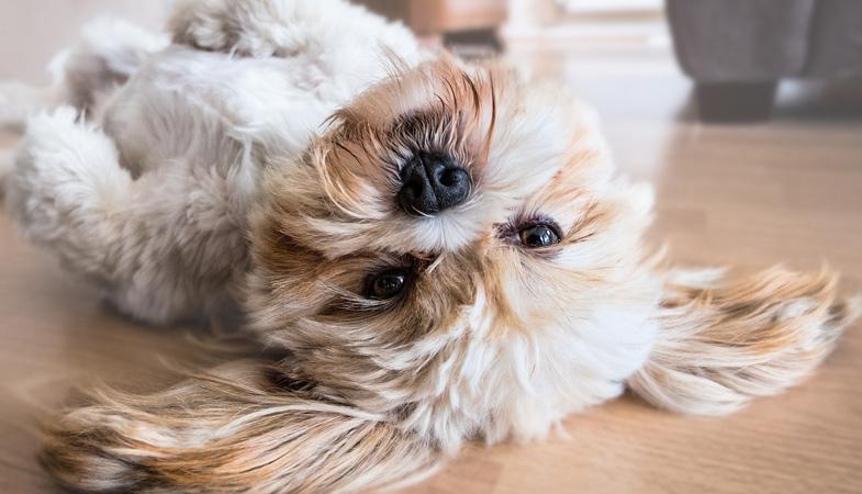 Primavera: il cane può avere un'allergia?