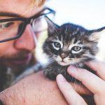 Post-Allergie-del-gatto