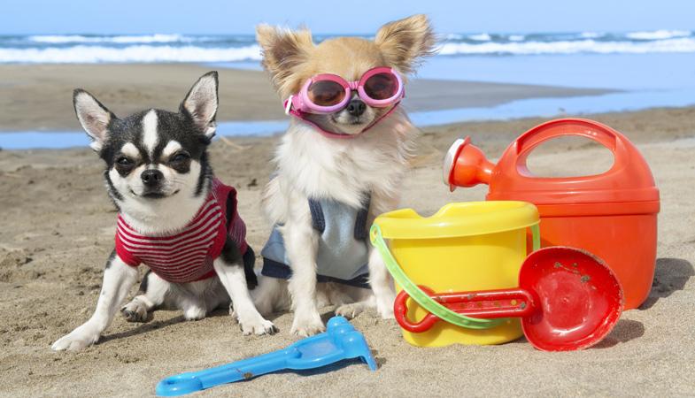 Dove vado in vacanza con il cane o con il gatto?