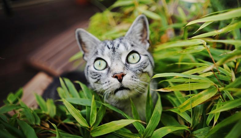 Sai cosa fare se il gatto mangia piante velenose?