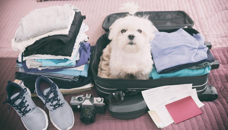 Come si organizza una vacanza estiva a 6 zampe?