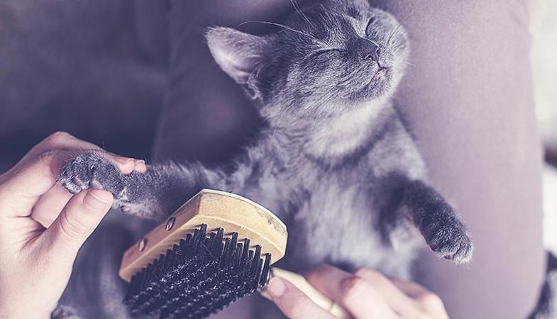 Affronta la muta del gatto in 10 mosse