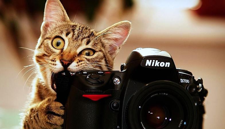 Come si fotografano il gatto e il cane?