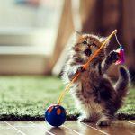 Post-gioco-per-il-gatto
