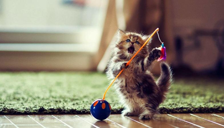 Perché per il gatto il gioco è importante?