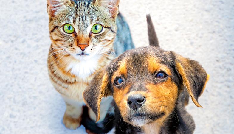 Alimentazione di cane e gatto: quanto sono importanti gli omega 3 e 6?