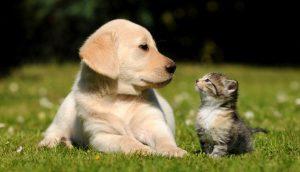 Post-cane-vs-gatto-piu-intellegente
