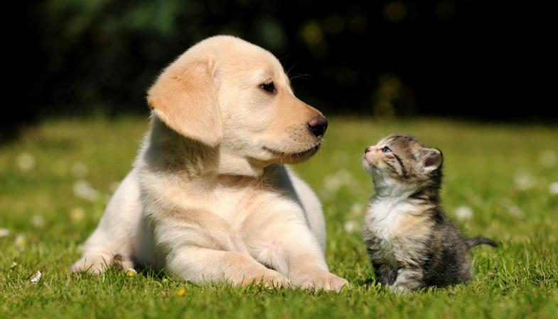 Cane più intelligente del gatto: è solo una leggenda?