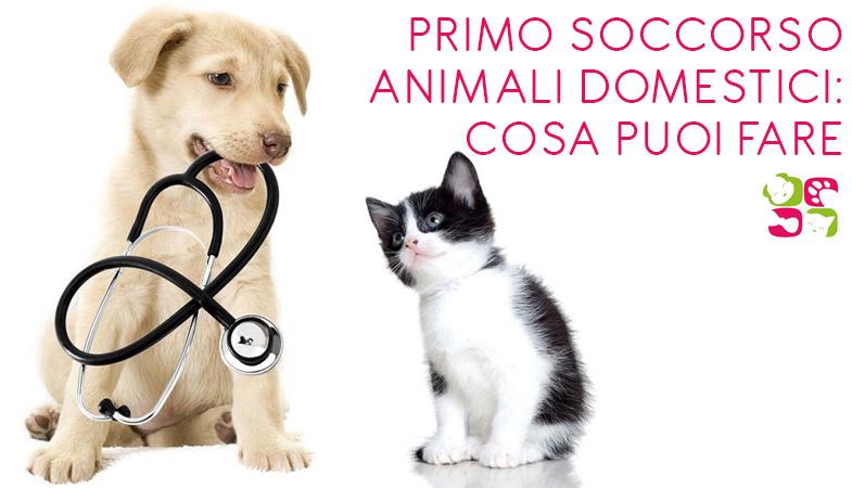 Primo soccorso animali domestici: cosa puoi fare