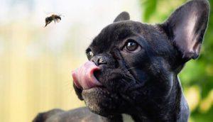 Post-puntura-d-ape-vespa