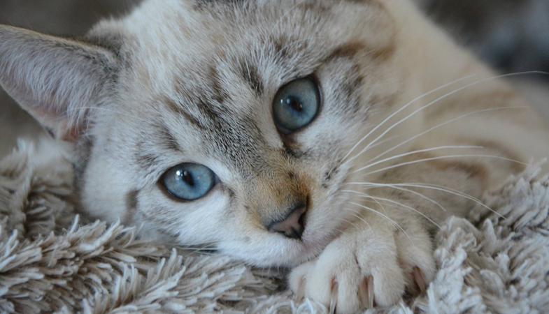 Il gatto fa la pasta: ecco 4 motivi