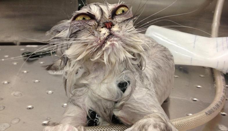 Gatti e acqua: è vero che la odiano?