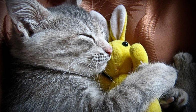 Perché un gatto dorme tra le 12 e le 16 ore?