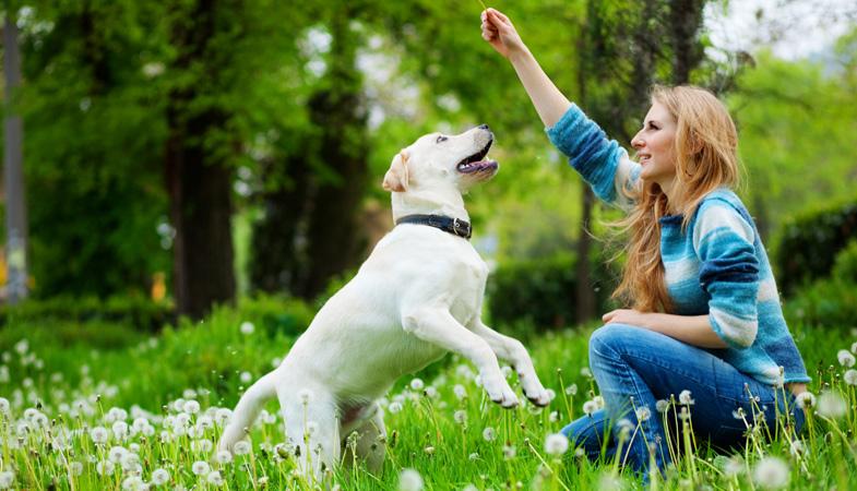 Come calcolare il numero delle passeggiate del cane