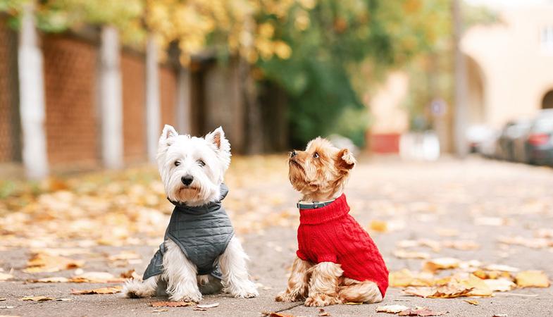 6 situazioni per vestire il cane o il gatto