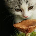 Post-Attenzione-funghi-velenosi