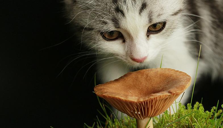 Cane, gatto e i funghi velenosi: cosa devi sapere