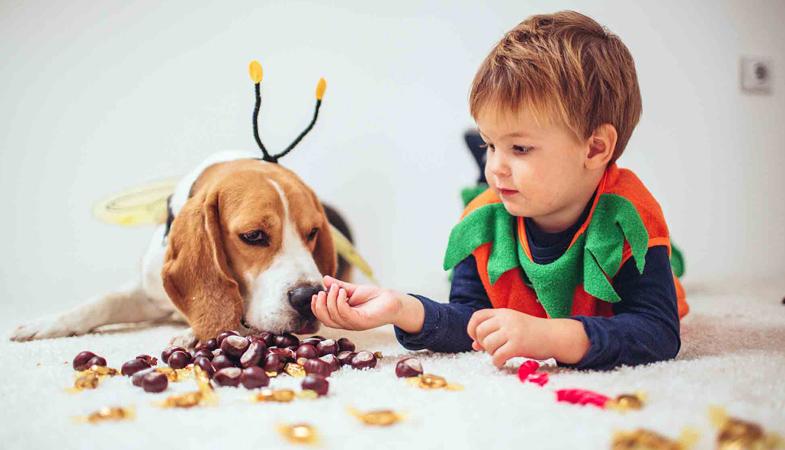 Cane e gatto possono mangiare le castagne?