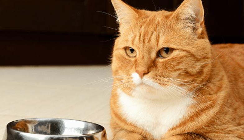 Come mai il gatto è schizzinoso?