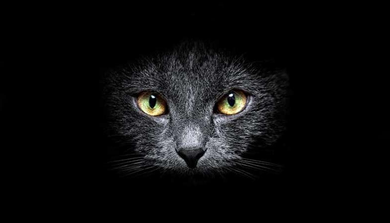 Ad Halloween proteggi il gatto nero