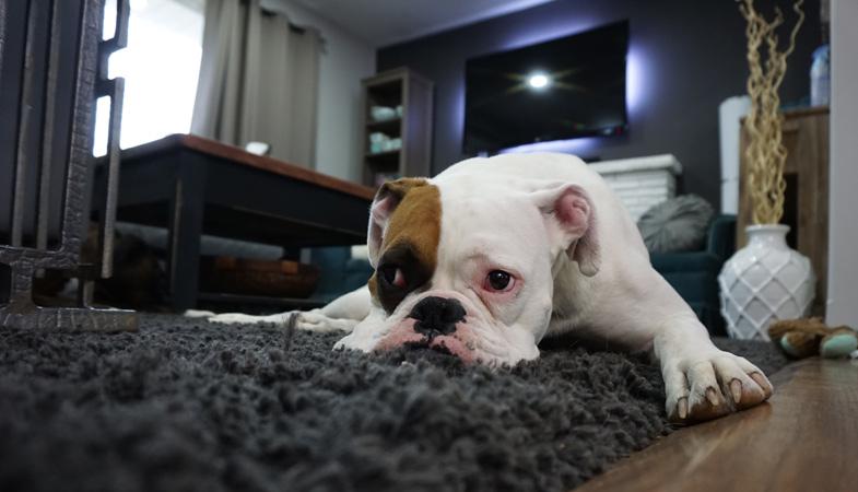 Il tuo cane sa stare da solo o soffre di solitudine?