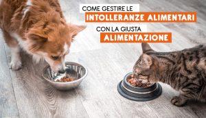 Intolleranze alimentari nel cane e nel gatto